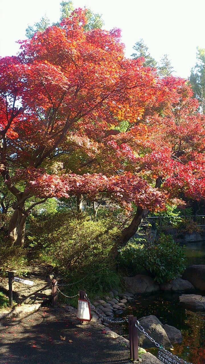 新宿 紅葉